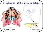 Development of the face and palate.