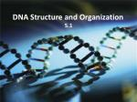 DNA Structure and Organization