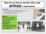What do we need to consider when using animals in experiments?