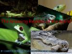 The Amazing Reptiles of the World