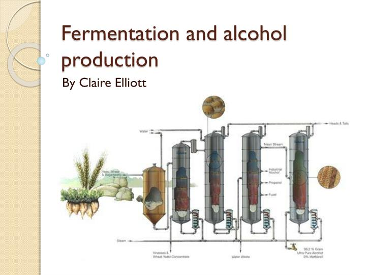 fermentation and alcohol production n.