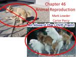 Chapter 46 Animal Reproduction