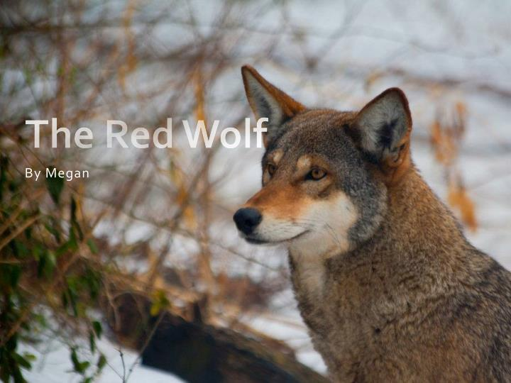 the red wolf n.