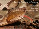 Fungal Disease in Snakes