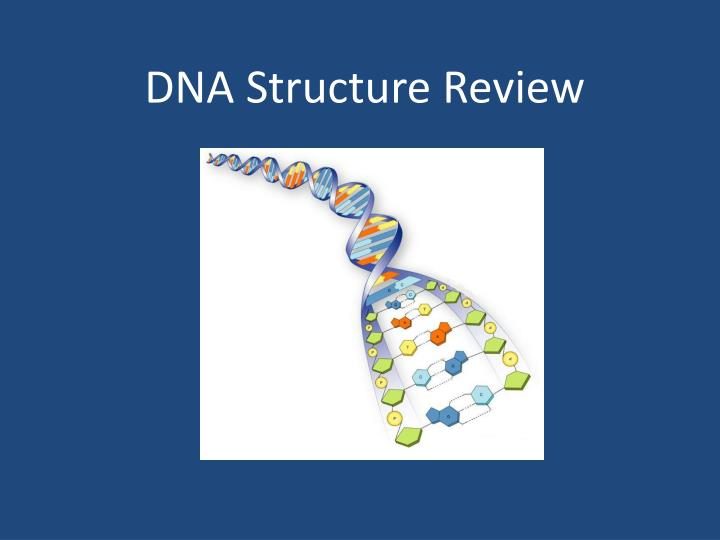 dna structure review n.