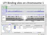 LFY Binding sites on chromosome 1