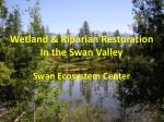 Wetland & Riparian Restoration In the Swan Valley