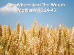 The Wheat And The Weeds  Matthew 13:24-43