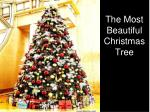 The Most Beautiful Christmas Tree