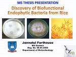 Discovery of  Biofunctional Endophytic Bacteria from  Rice