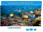 Coral Reef and Animals