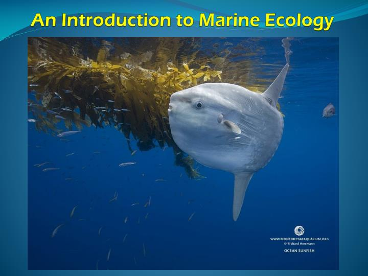 an introduction to marine ecology n.
