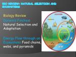 Bio review: Natural Selection and Ecosystems