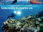 Scuba Diving and Marine Life