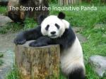 The Story of the Inquisitive Panda