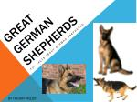 Great German Shepherds