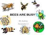 BEES ARE BUSY