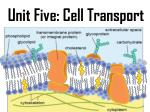 Unit Five: Cell Transport