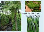 Plant Reproduction:  Seedless Plants