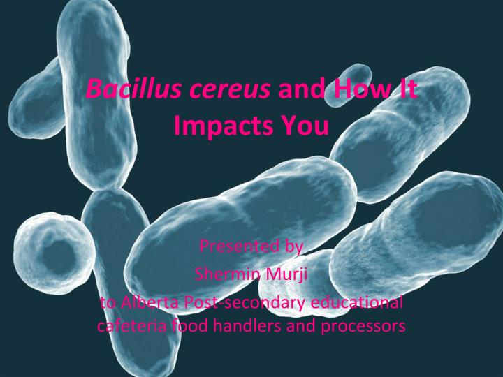 bacillus cereus and how it impacts you n.