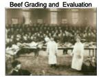 Beef Grading and Evaluation