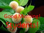 Good Morning! Students!