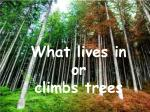 What lives in or climbs trees