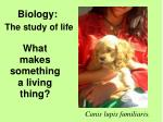 What makes something  a living thing?