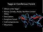 Taiga or Coniferous Forest