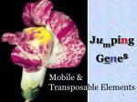 Mobile & Transposa ble Elements