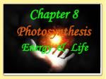 Chapter 8 Photosynthesis Energy & Life
