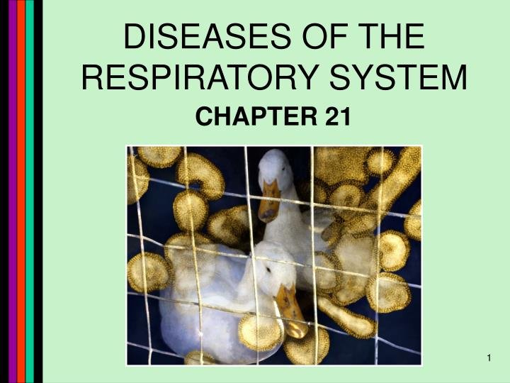 diseases of the respiratory system n.