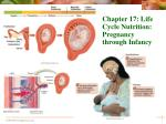 Chapter 17: Life Cycle Nutrition: Pregnancy through Infancy