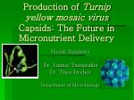 Production of Turnip yellow mosaic virus Capsids: The Future in Micronutrient Delivery