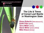 The Life & Times of Cereal Leaf Beetle in Washington State