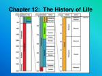 Chapter 12: The History of Life