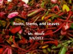 Roots, Stems, and Leaves Ms. Moore 9/6/2012