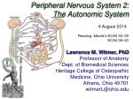 Peripheral Nervous System 2: The Autonomic System