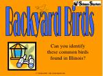 Can you identify these common birds found in Illinois?