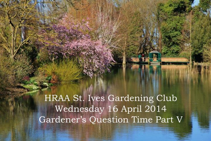 hraa st ives gardening club wednesday 16 april 2014 gardener s question time part v n.