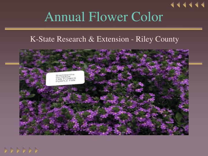 annual flower color n.
