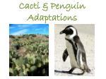 Cacti & Penguin Adaptations