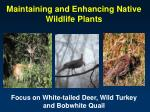 Native Grasses, Forbs, Vines, Shrubs and Trees Important to Wildlife in the Southeast
