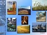 Biotechnology In Grain Trade Practical Issues for Global  Trade
