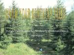 Using a Dichotomous Key to identify coniferous trees in our region click to continue