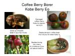 Coffee Berry Borer Kobe Berry Eo
