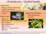 Orchidaceae – Orchid Family