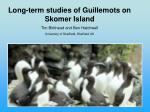 Long-term studies of Guillemots on Skomer Island Tim Birkhead and Ben Hatchwell