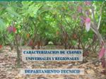 CARACTERIZACION DE  CLONES  UNIVERSALES Y REGIONALES