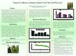 Nitrogen Use Efficiency of Staygreen Sorghum Under Three Soil Water levels